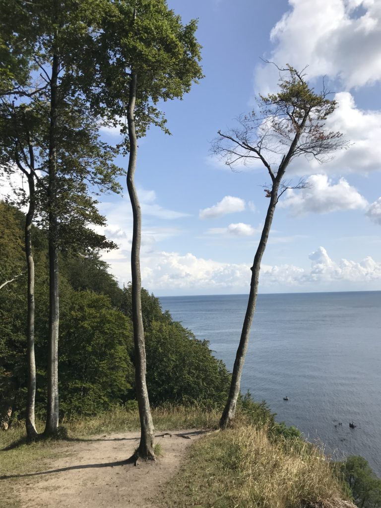 Direkt an der Steilküste bei den Kreidefelsen Rügen wandern